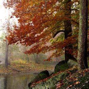 Fred Eberhart, Robinson River Elms 2, digital photograph
