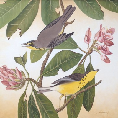 Caron Broadway After James Audubon Canadian Flycatcher 36x48 oil