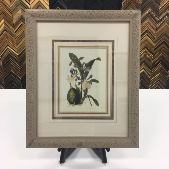 Framed Botanical with French Lines