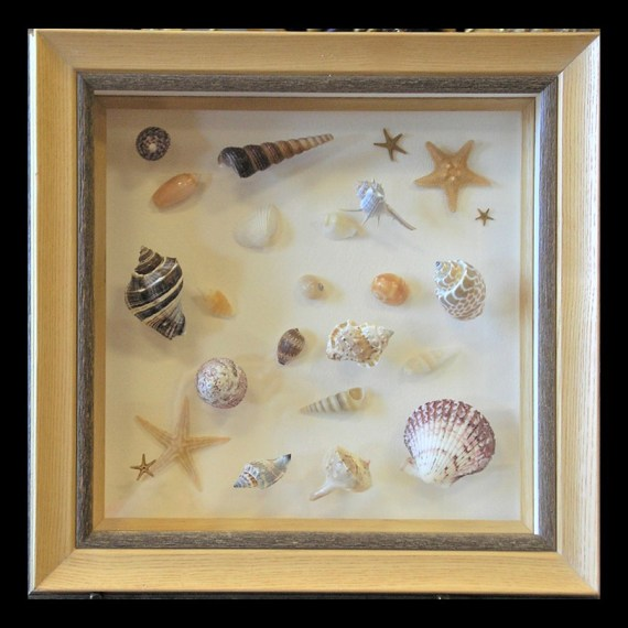 Layered Seashell Collection