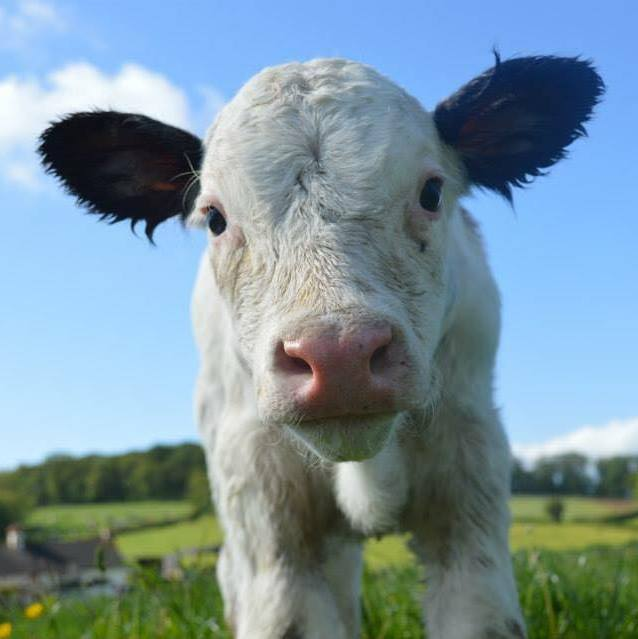 Government's Dairy Response Fund Ends Midnight, Sept 11th