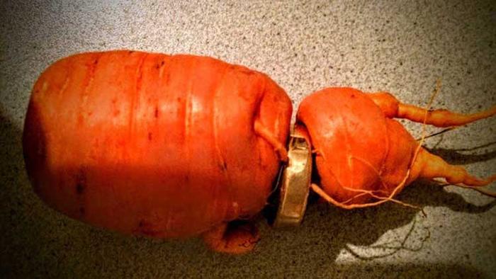 Ring in carrot
