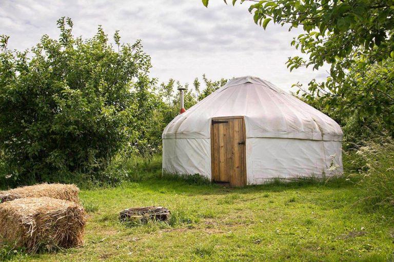 Mountjoy shelter plea