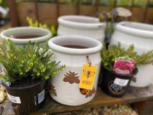 Bee Kind Pot