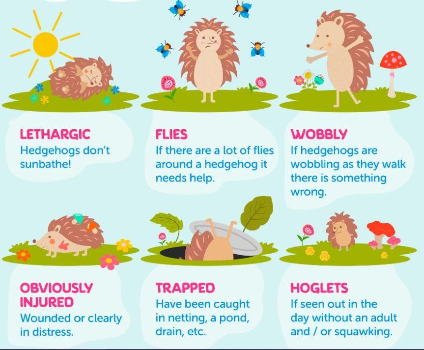 Hedgehogs Need Help