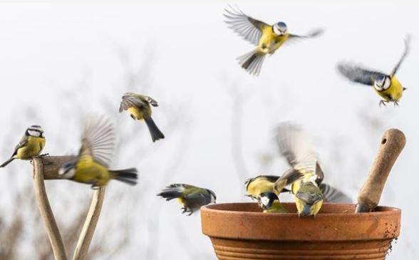 Big Garden Birdwatch 29th – 31st January