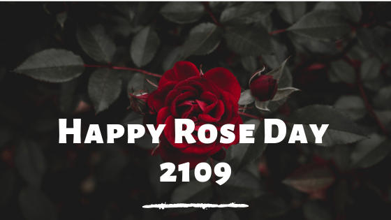 Rose Day Wishes 2019