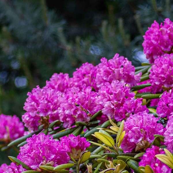 Baili Rhododendron Scenic Area