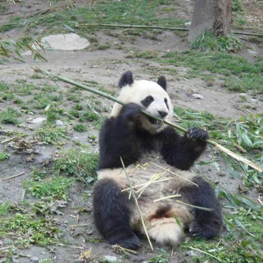 Chengdu Tour 4 days