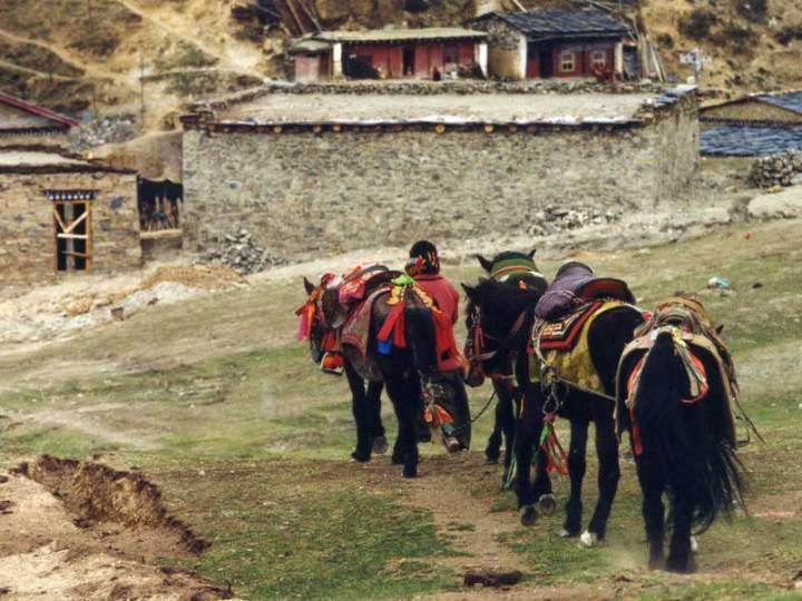 tagong tibetan tribe