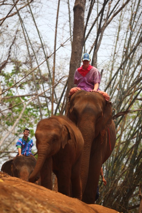 Jumbo leading the way as we traverse the jungle trail