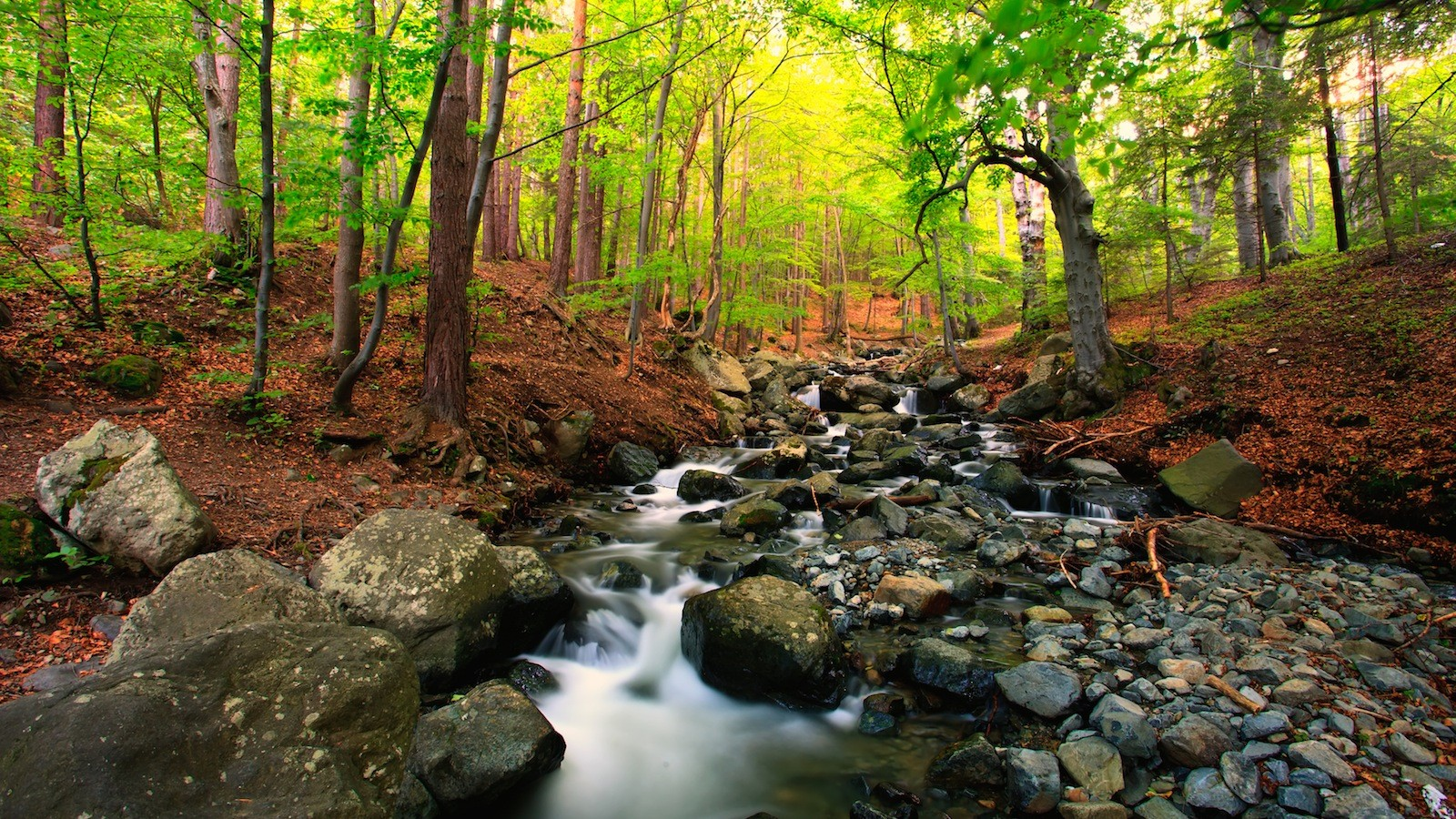 Research Points To Importance Of Tree Cover For Stream