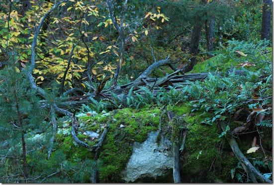 mousse d'arbre (photo de voyageur gourmand)