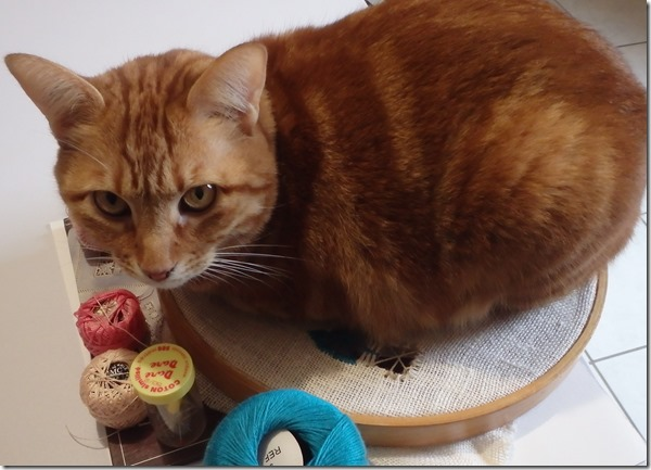 chat et broderie
