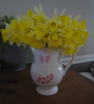 fleurs 6 mars 2014