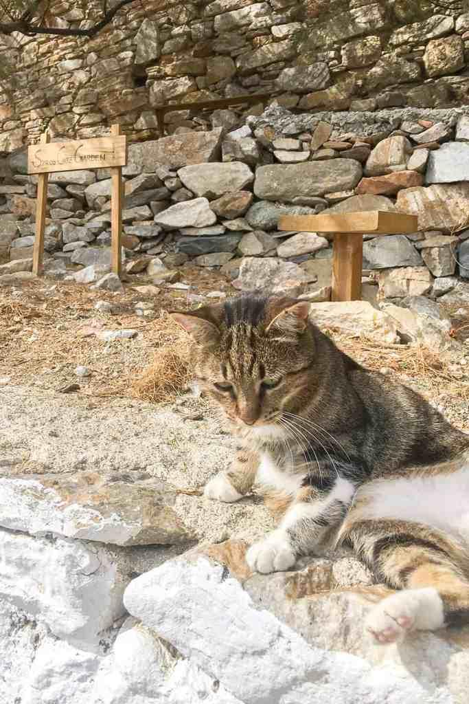 Syros Cat Garden greece