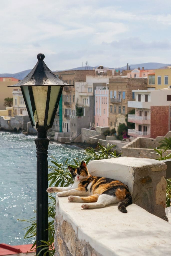 Greek cat sunbathing in Vaporia, Ermoupoli Syros