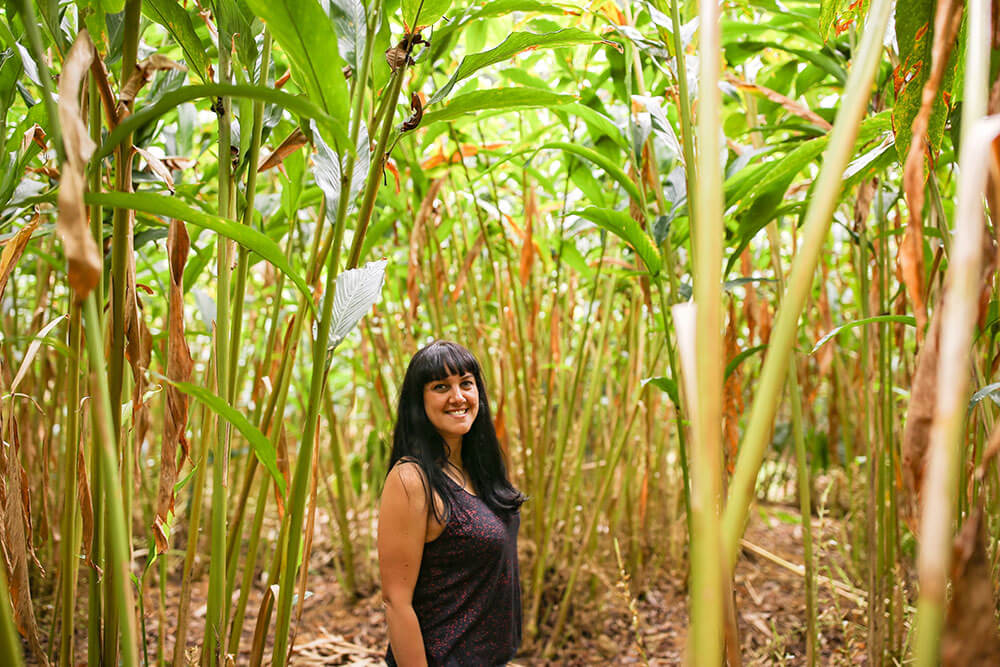 Walking through a cardamom planation in Munnar, Kerala, India #munnar #kerala #india