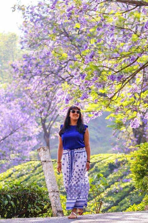 Walking on the road with with a background of tea plantations and jacaranda trees in bloom, Munnar in Kerala #munnar #kerala #india