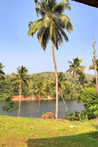 View of the River Periyar from Windermere River House in Neriamangalam -#kerala #india