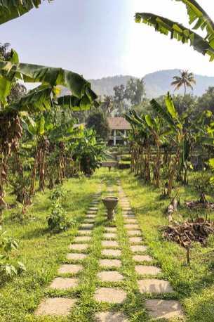 Path going through banana plantation at Windermere River House in Neriamangalam, Kerala - #kerala #india