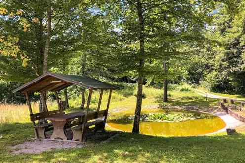 Picnic bench and pond in the forest
