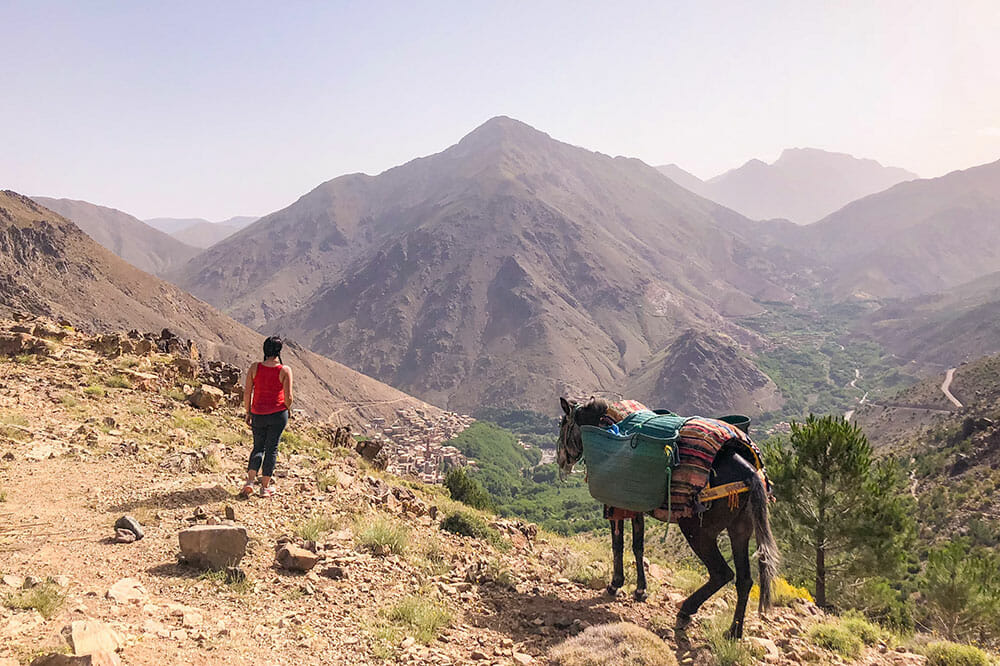 Standing next to a mule overlooking the valley and the mountains in the distance