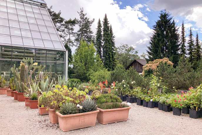 Planters and potted plants in a garden next to a glasshouse