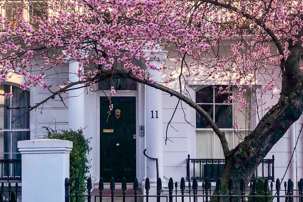 Early cherry blossom in South Kensington