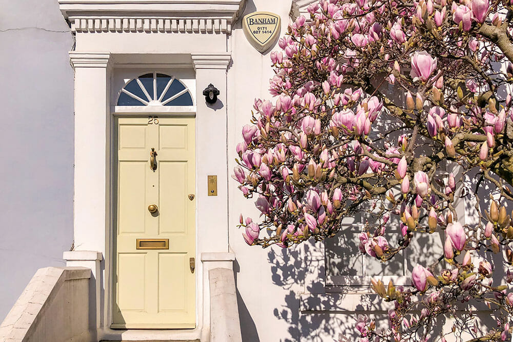 Magnolia tree in bloom outside a house with a yellow door