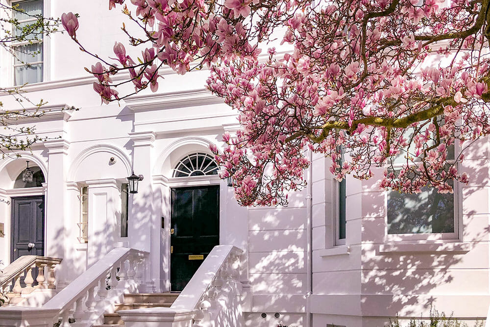 Branches of blooming magnolias over a white building with a black door