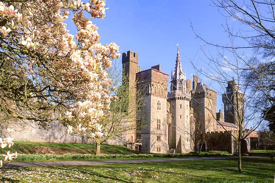 Park with a castle in the background and magnolia tree in bloom in the foreground