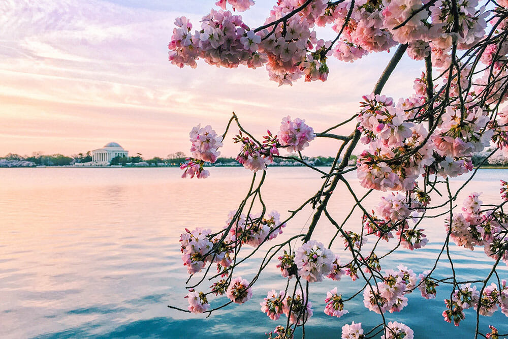 Large lake with a small building on the other side of the water, and cherry blossom branches in the foreground