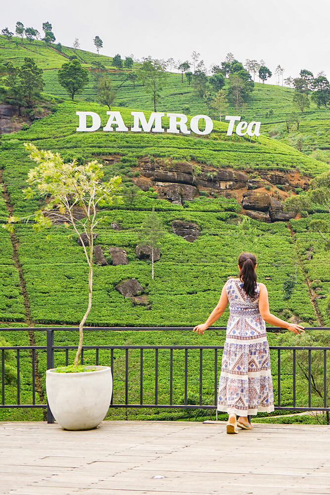 Standing by a verandah looking over a hill covered in tea trees with a sign reading Damro Tea