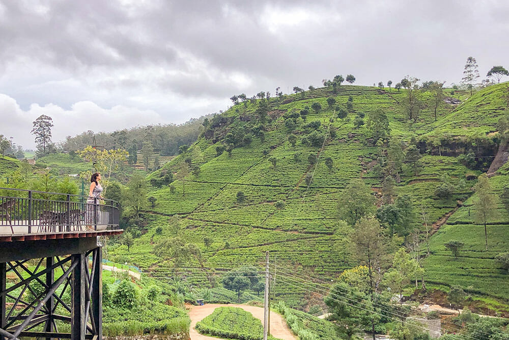 Standing on a balcony overlooking hills covered with tea plantations