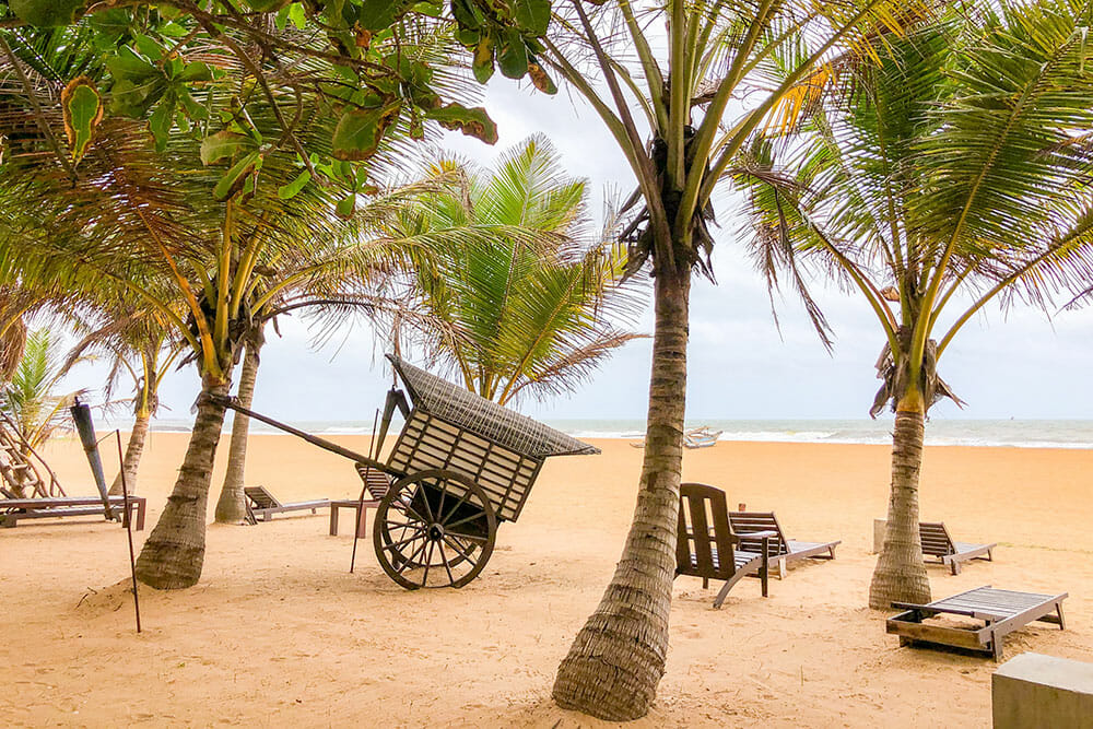 Beach with palm trees, lounge chairs and wooden cart