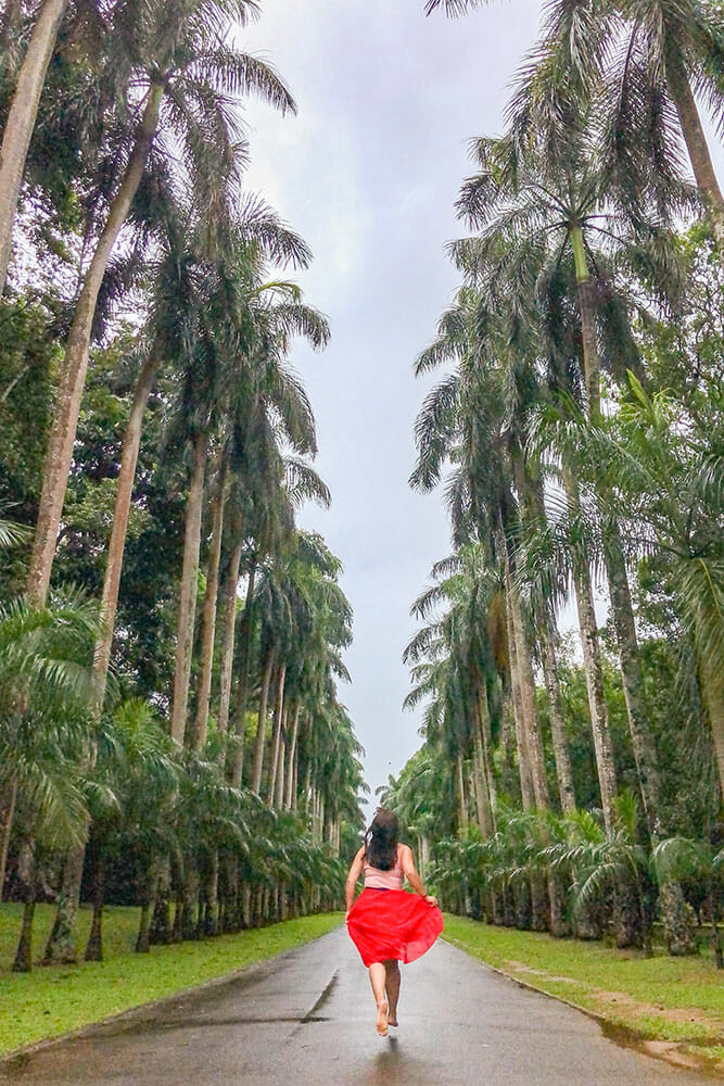 Running down an avenue of tall palm trees