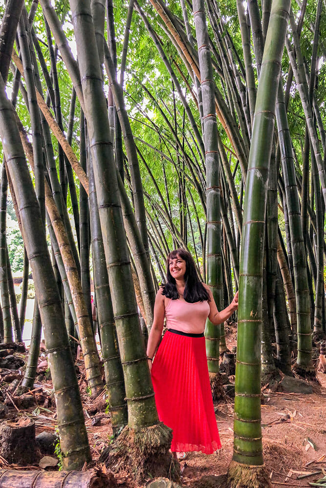Standing in a forest of giant bamboo trees
