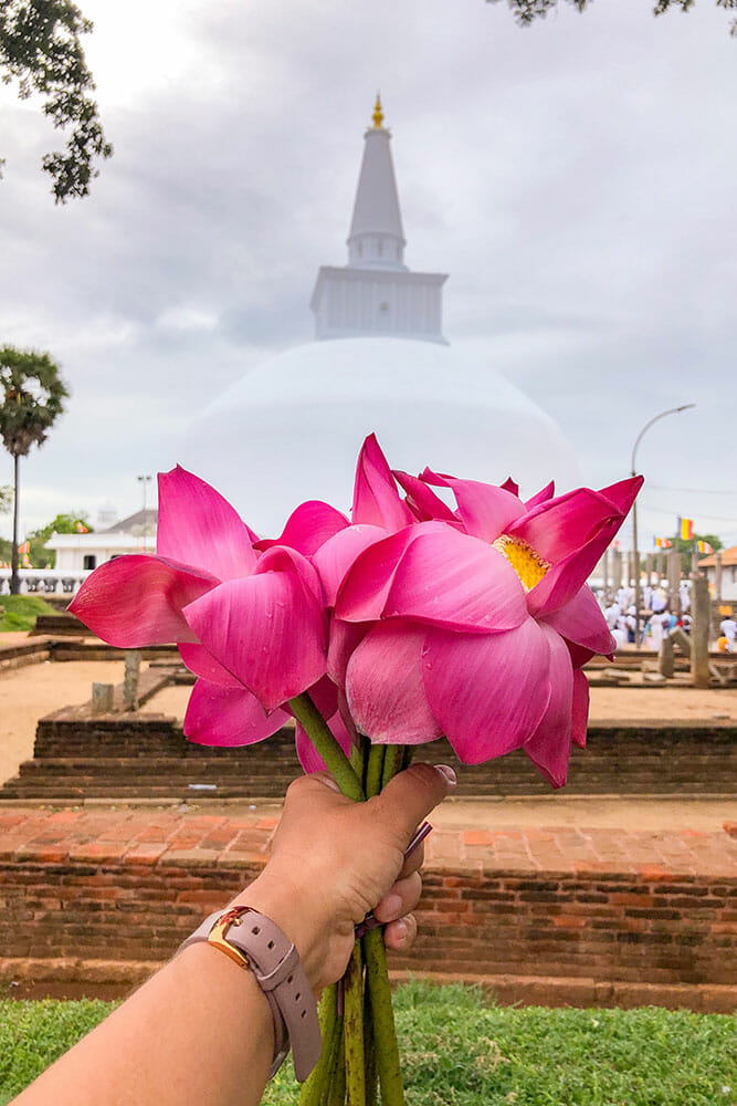 Hand holding pink lotus flowers with large white stupa in the background