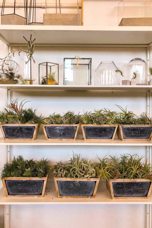 Four shelves with succulent plants in black slate troughs and glass terrariums