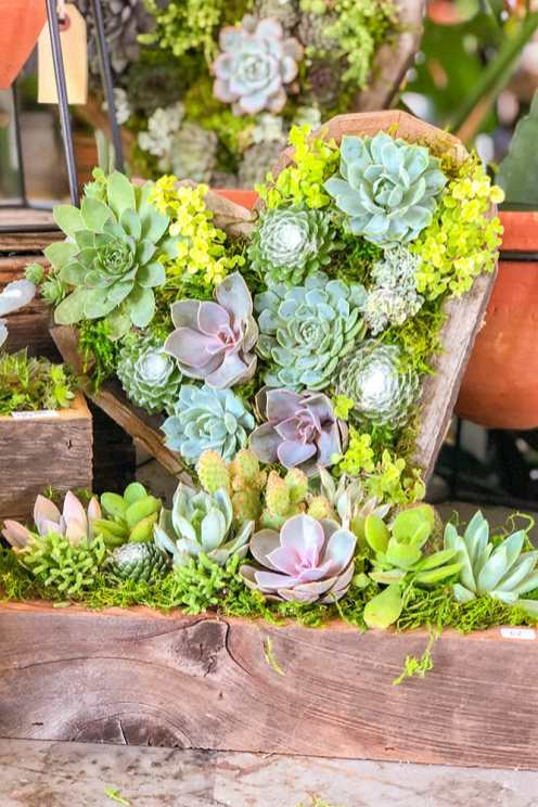 Succulent plants arranged in small wooden troughs with one in the shape of a heart