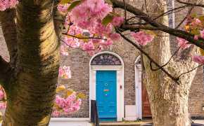 Cherry blossoms with a blue door in the background - Dublin is one of the best spring destinations in Europe