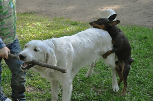 Top 10 Pictures of Random Dogs Humping  Bro J Simpson