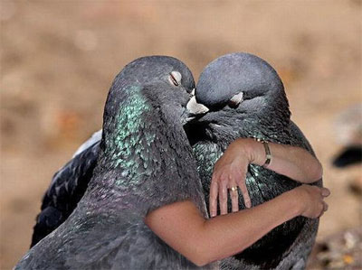 Top 10 Birds With Arms Pictures  Bro J Simpson