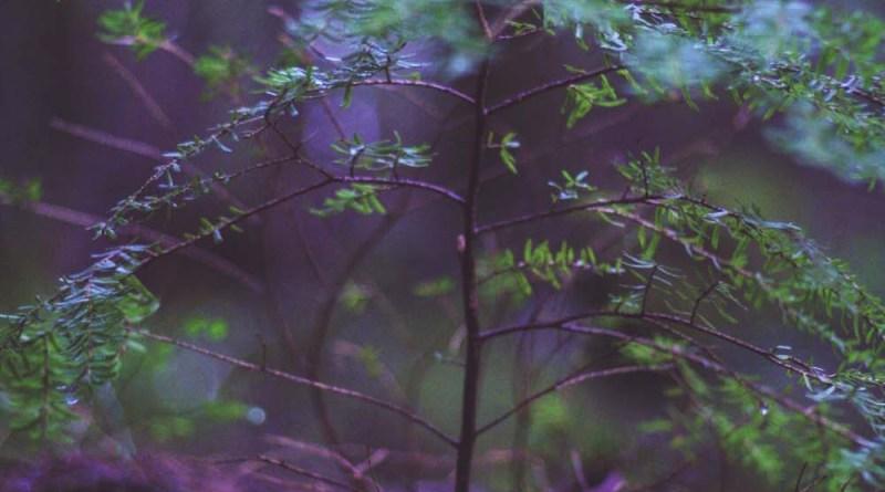 forest growth nature moss clover log wood