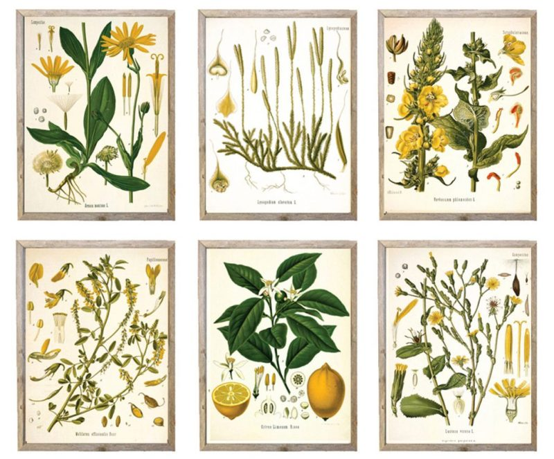 Set of Six Botanical Illustration Scientific Prints Etsy