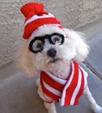 Last Minute DIY Halloween Costumes for Your Dog - Broke ...