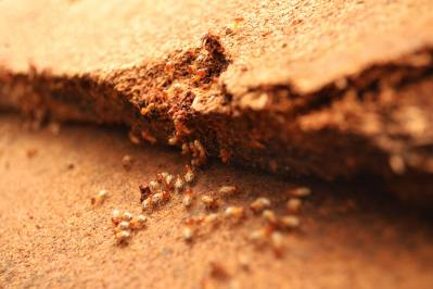 termites-background