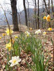 Spring Awakens!