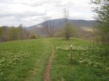 Appalachian Trail 324